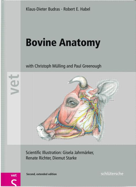 Bovine Anatomy An Illustrated Text Second Edition