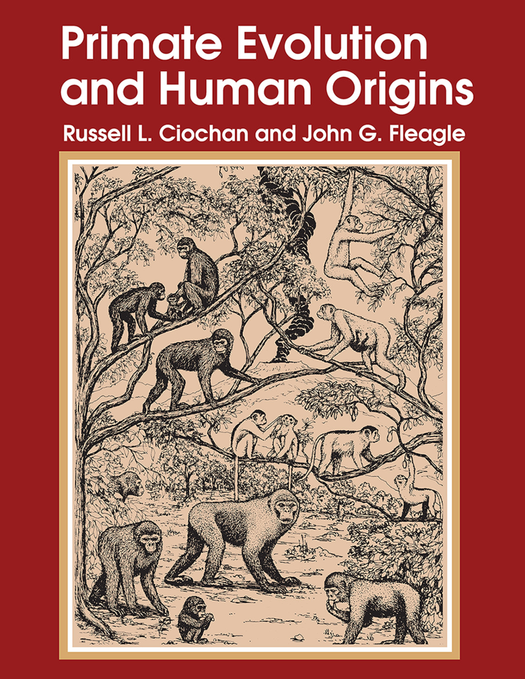 Primate Evolution and Human Origins: 1st Edition (Paperback) book cover