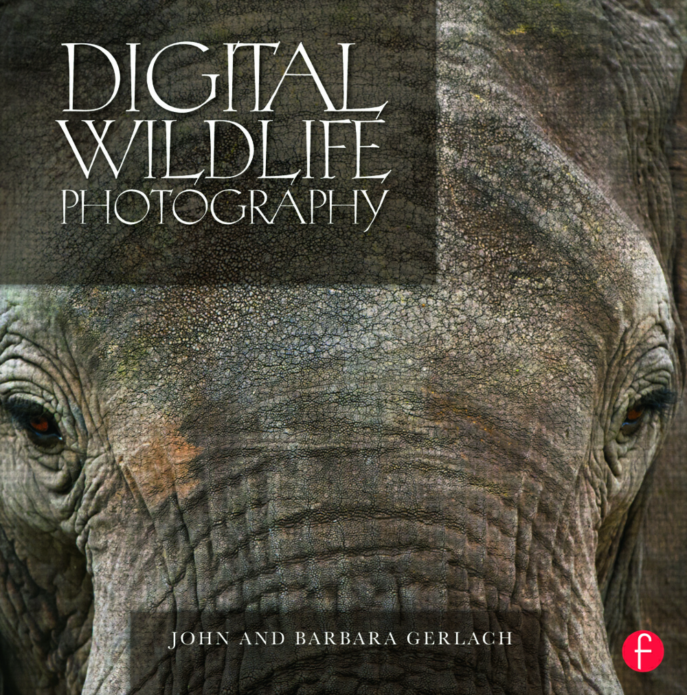 Digital Wildlife Photography (Hardback) book cover