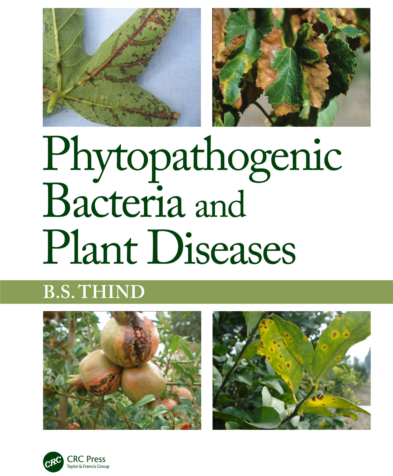 Plants as Carriers of Human Enteric Bacterial Pathogens