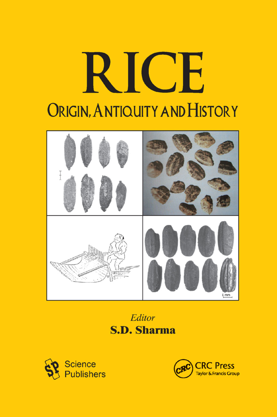 Rice: Origin, Antiquity and History, 1st Edition (Paperback) book cover