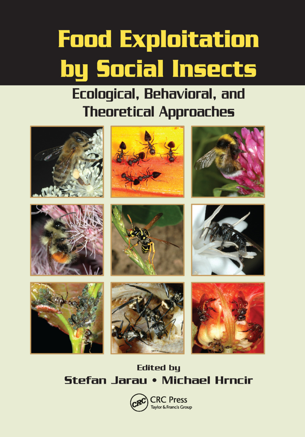 Food Exploitation By Social Insects: Ecological, Behavioral, and Theoretical Approaches, 1st Edition (Paperback) book cover