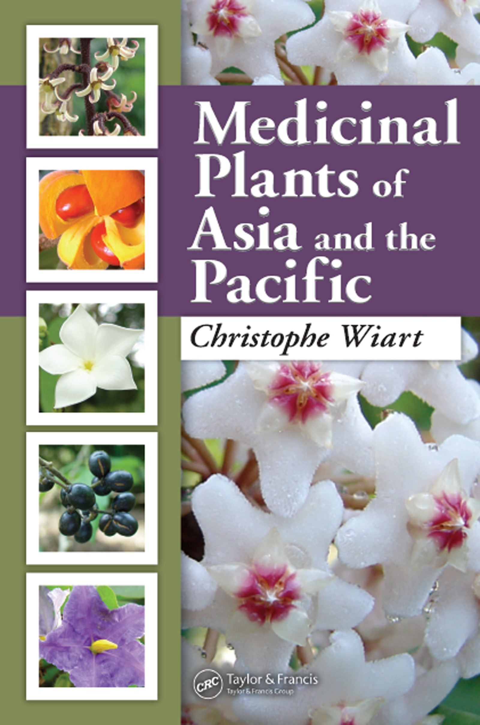 Medicinal Plants Classified in the Family Solanaceae