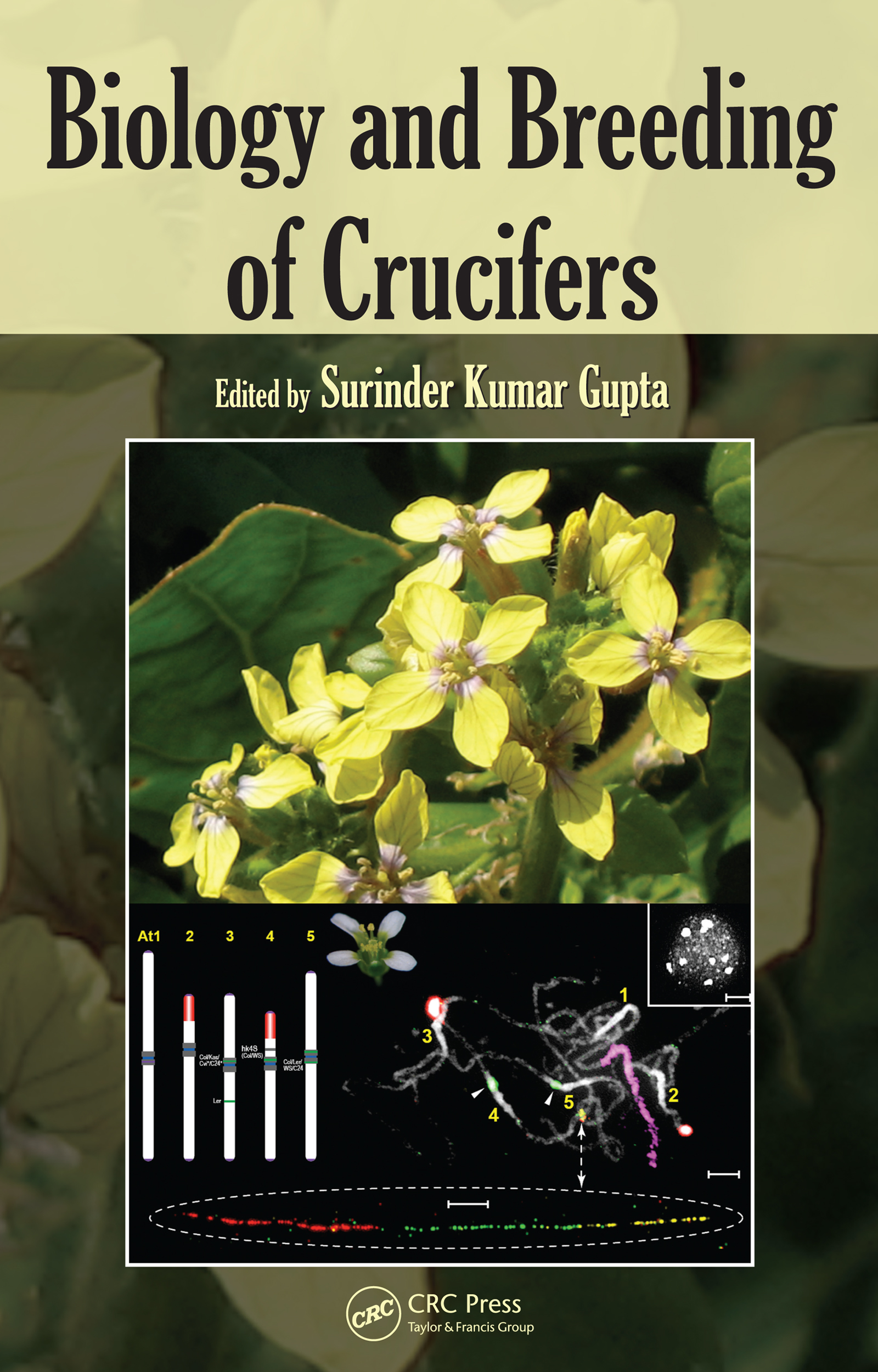 Biology and Breeding of Crucifers: 1st Edition (e-Book) book cover