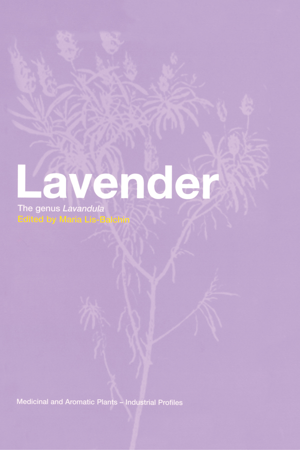 Lavender growing in England for essential oil production