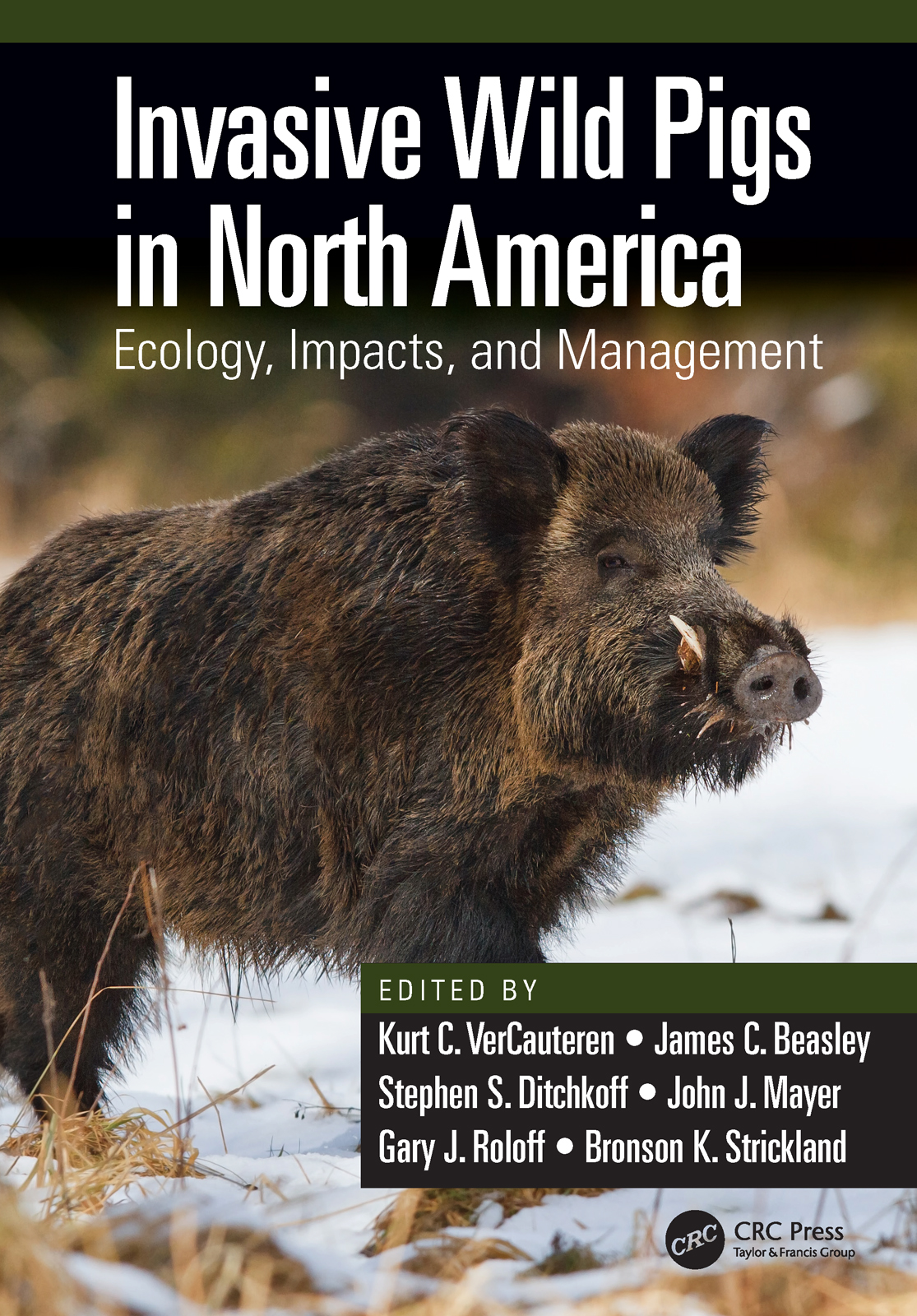 Invasive Wild Pigs in North America: Ecology, Impacts, and Management, 1st Edition (Hardback) book cover