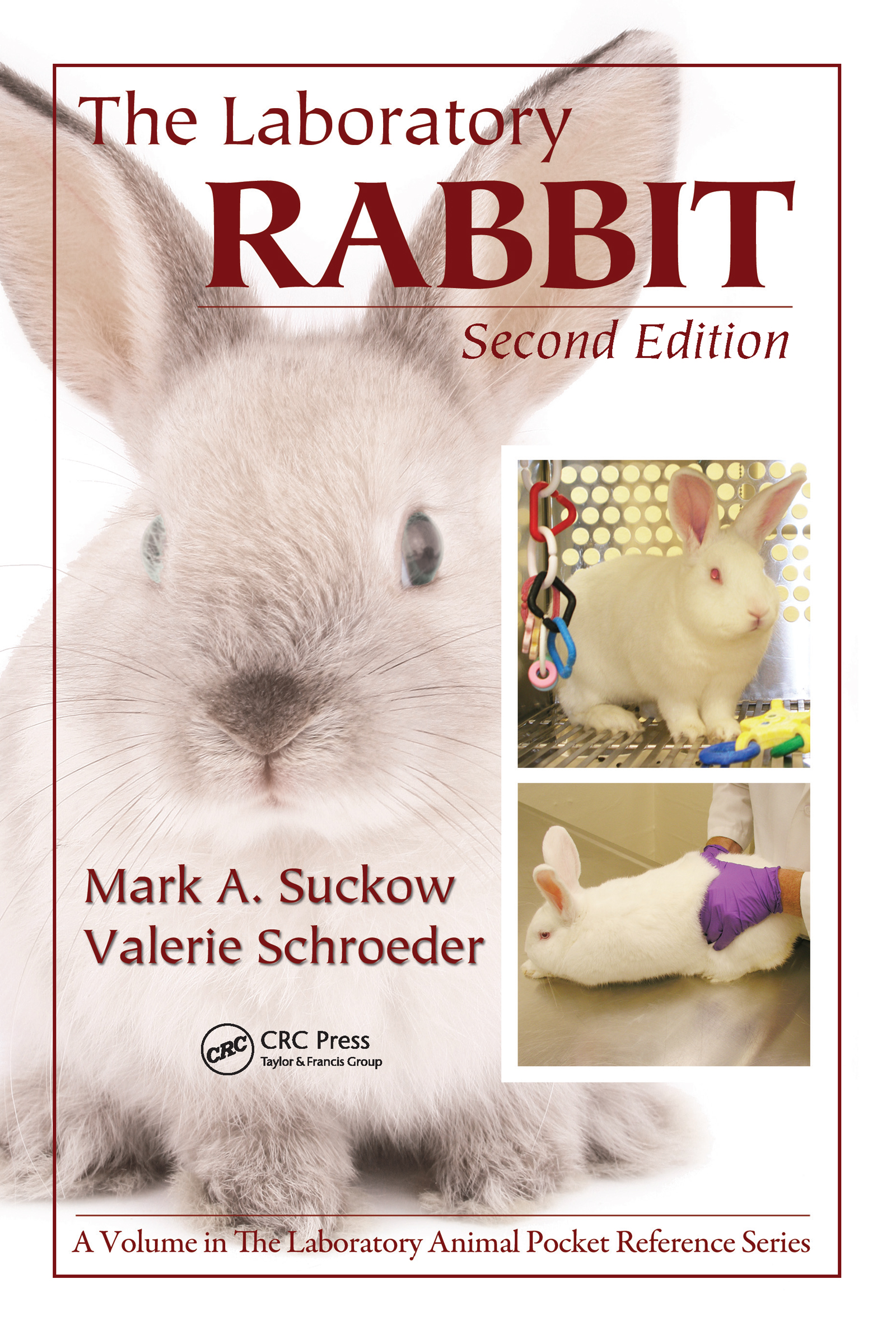 The Laboratory Rabbit: 2nd Edition (Paperback) book cover