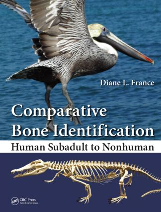 Comparative Bone Identification: Human Subadult to Nonhuman book cover