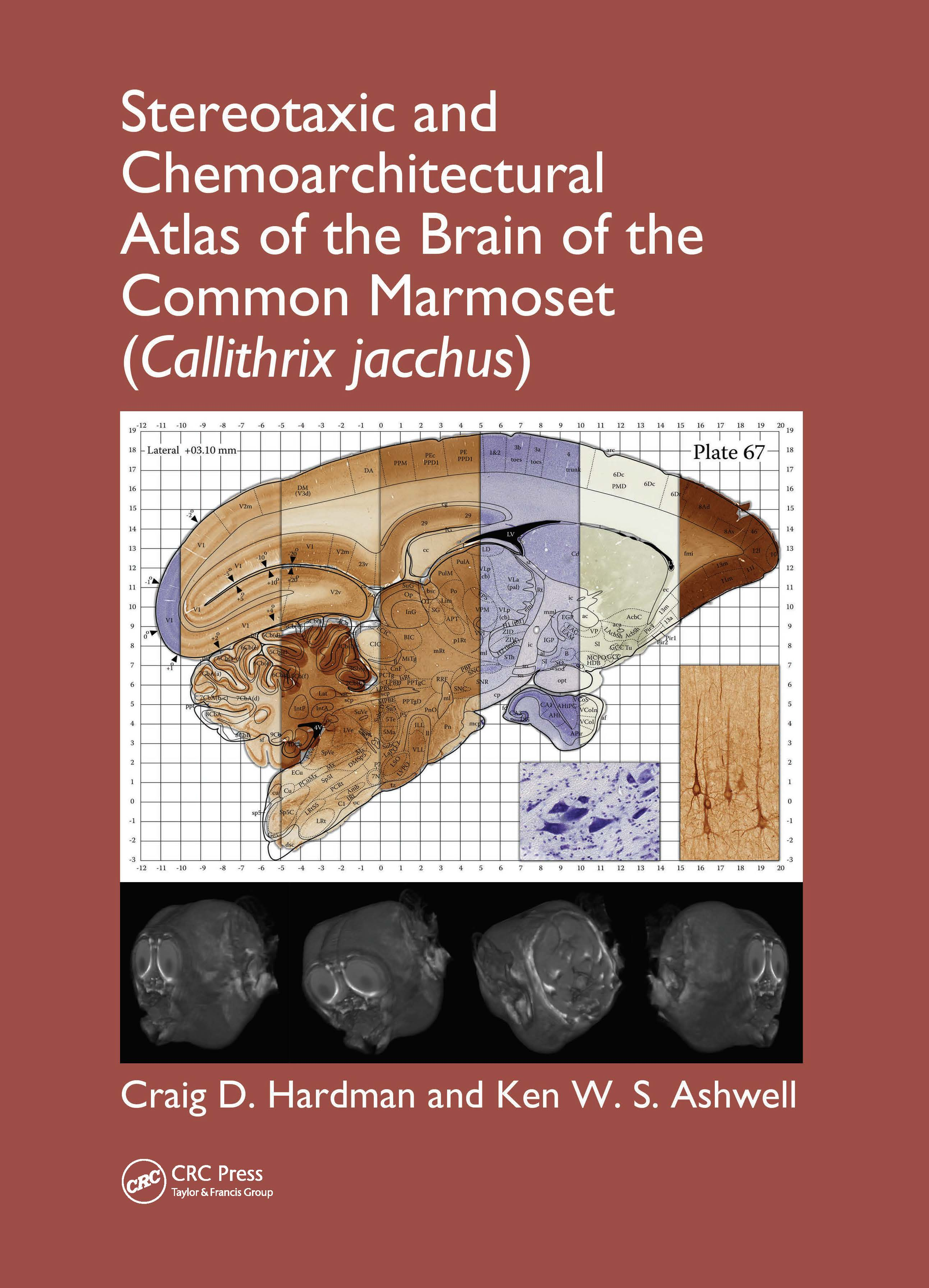 Stereotaxic and Chemoarchitectural Atlas of the Brain of the Common Marmoset (Callithrix jacchus) (Hardback) book cover