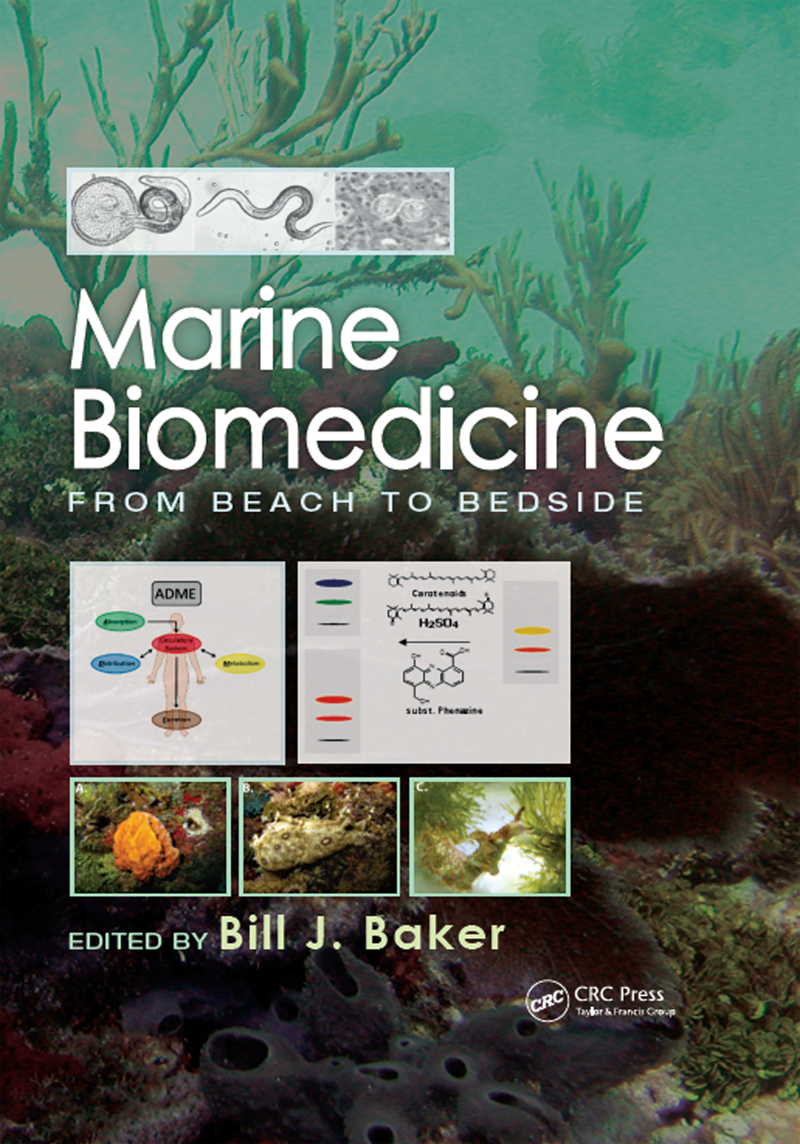 Marine Biomedicine: From Beach to Bedside, 1st Edition (Hardback) book cover