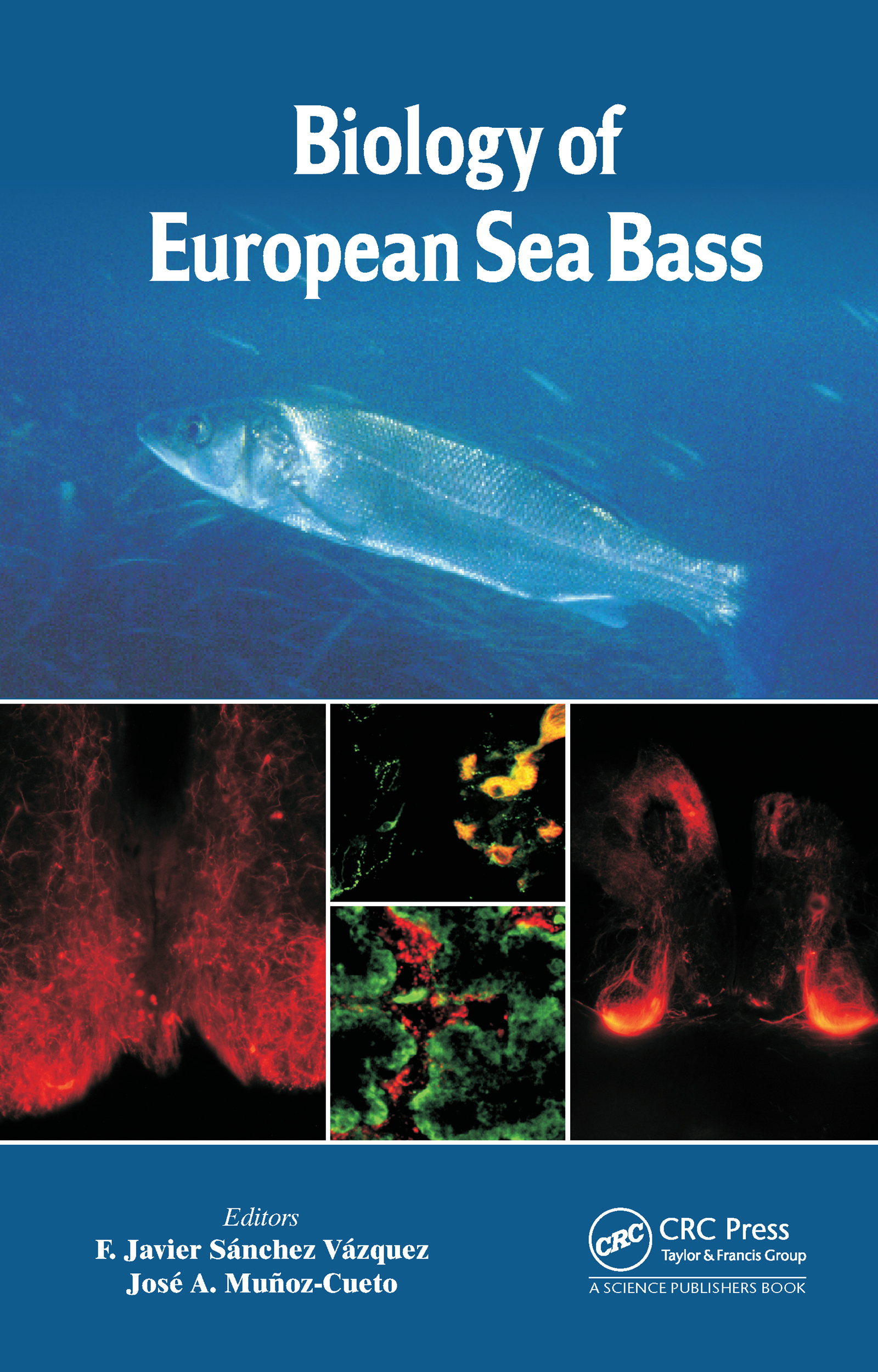 Biology of European Sea Bass: 1st Edition (Paperback) book cover