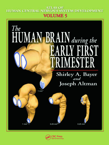 The Human Brain During the Early First Trimester book cover