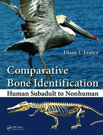 Comparative Bone Identification Human Subadult to Nonhuman book cover