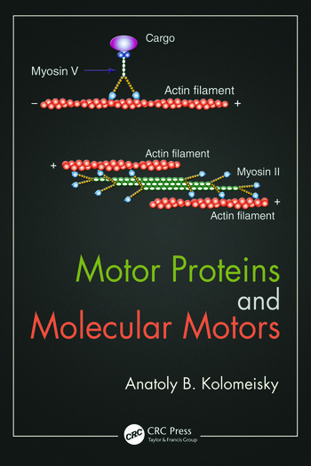 Motor Proteins and Molecular Motors book cover