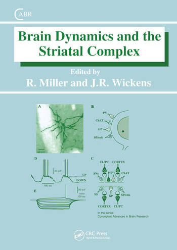 Brain Dynamics and the Striatal Complex book cover