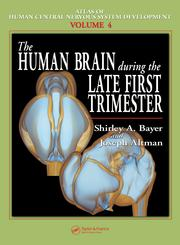 The Human Brain During the Late First Trimester