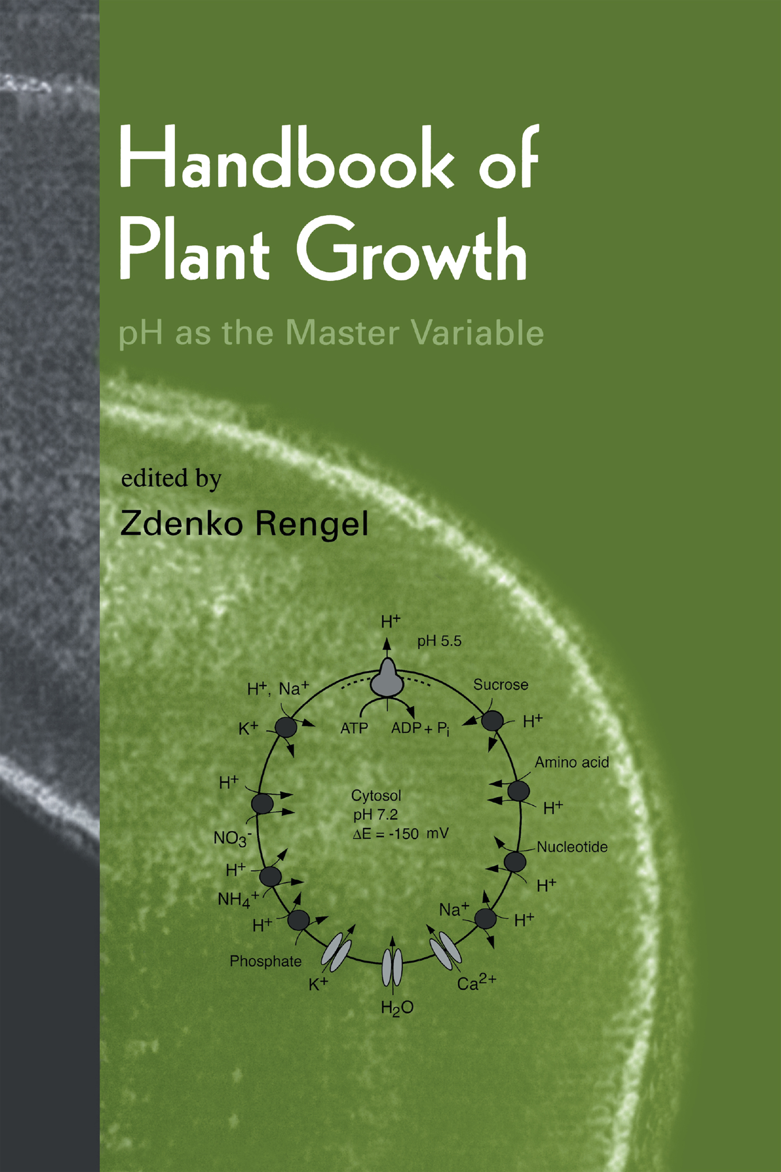 Confocal pH Topography in Plant Cells: Shifts of Proton Distribution Involved in Plant Signaling