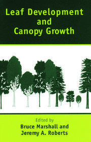 Leaf Development and Canopy Growth